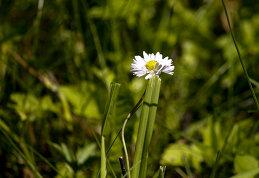 виктория цветкова