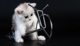 Sunny_cat -