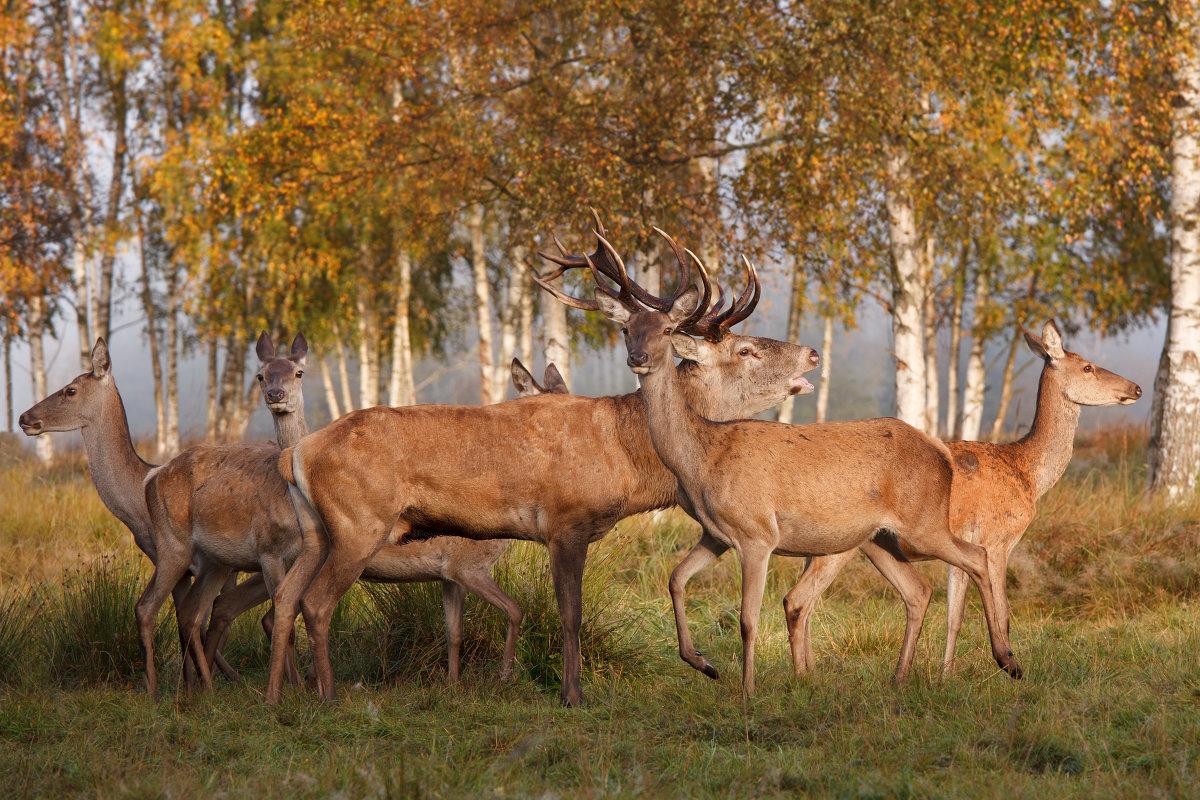 Осень в оленьем парке - Julija