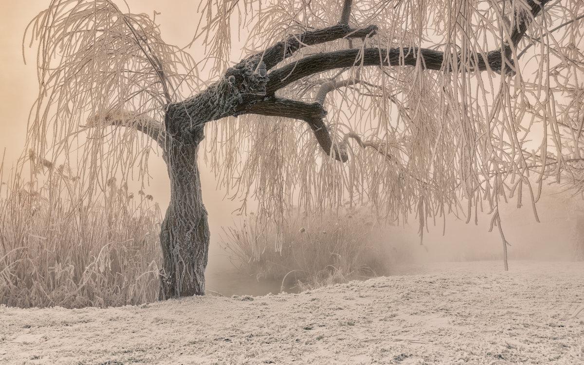 Тёплая графика морозного утра - Александр Плеханов