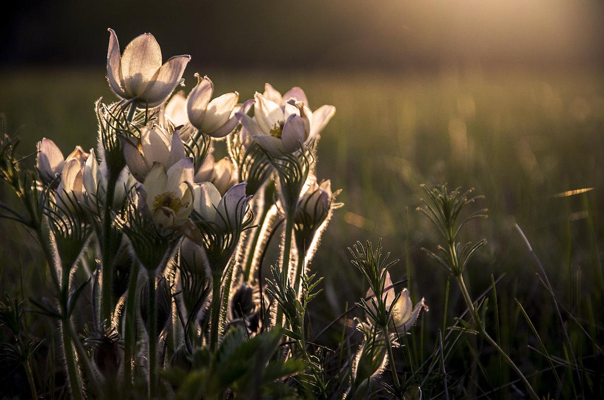 Ловец снов. Сон-трава. - Татьяна Степанова