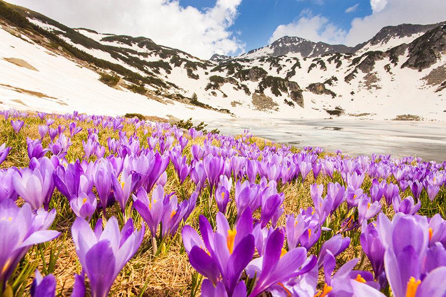 Болгарская весна - Свилена Табакова