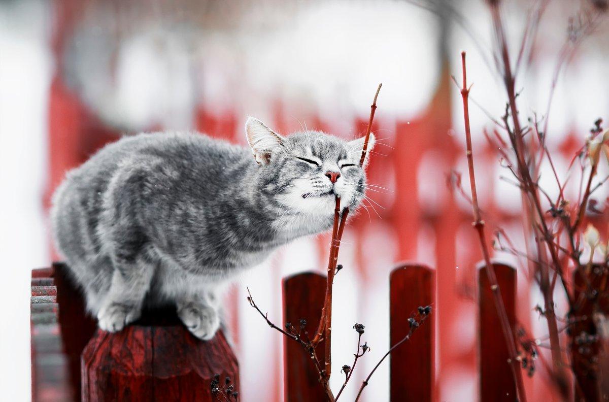 В воздухе запахло весной - Наталья