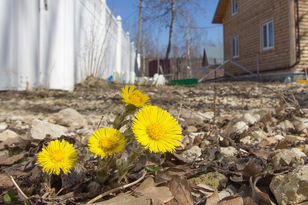 Моя Весна - Андрей Синявин