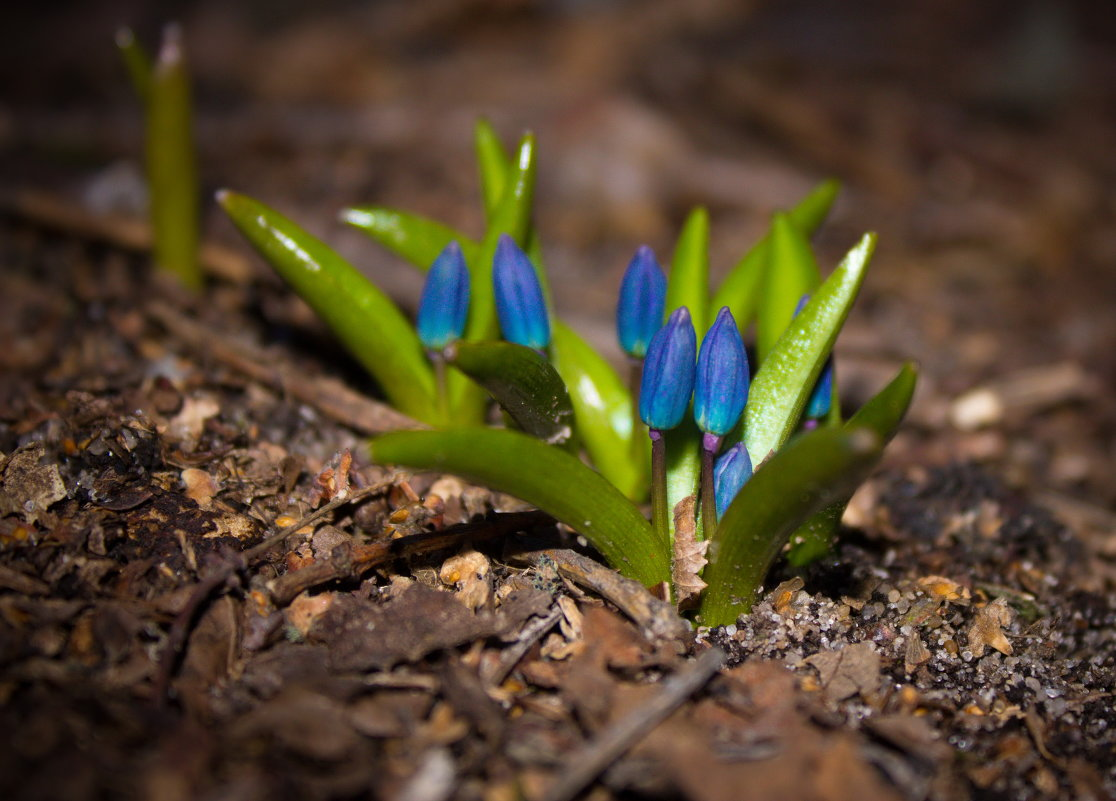 Первый цветок - Маргарита Си