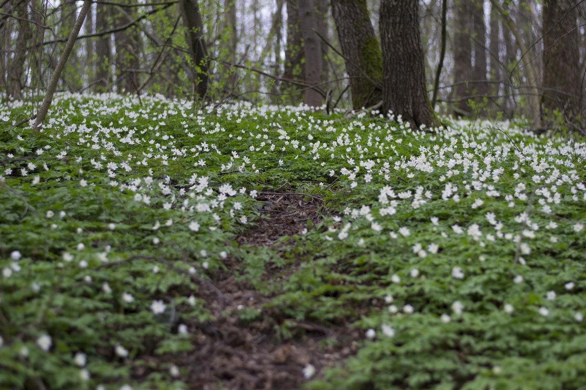 весенний лес - Юлия Фалей