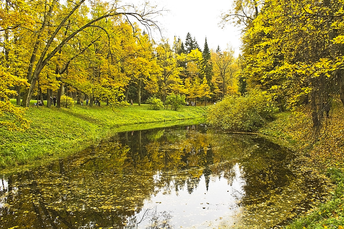 Осень золотая... - Senior Веселков Петр