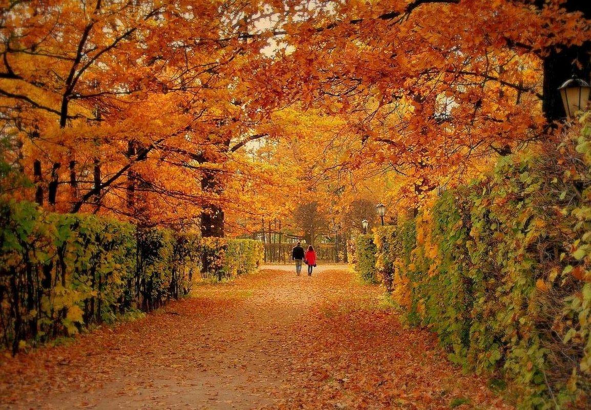 Цвет осени - Надежда Бахолдина