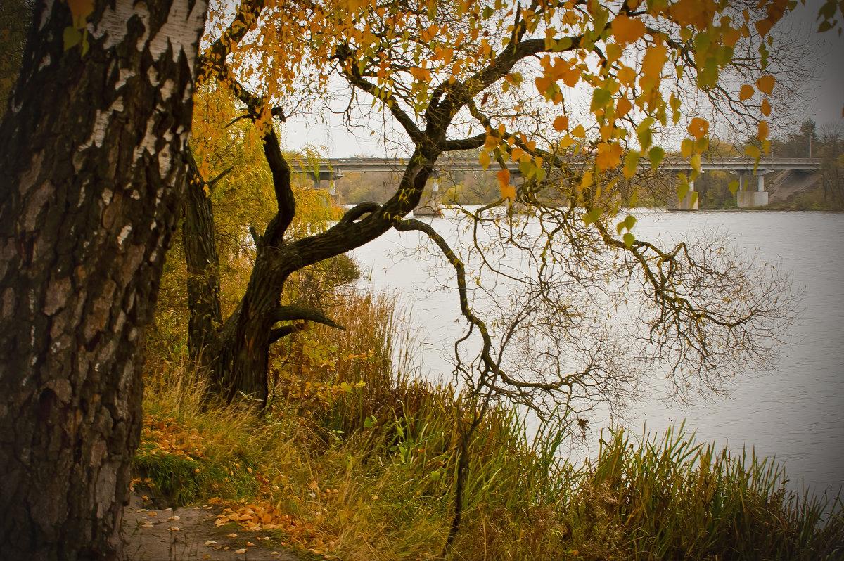 Это осень ... - Ольга Винницкая (Olenka)