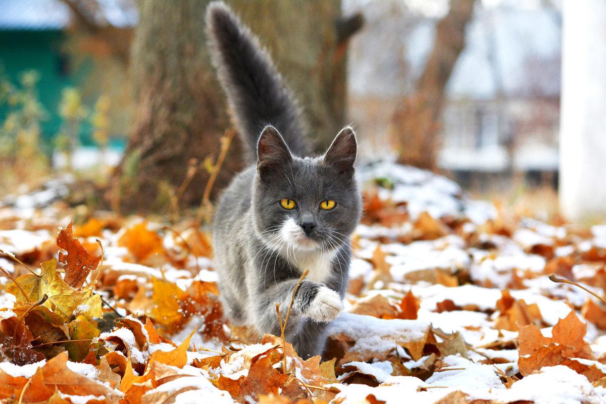 Снежная осень - Екатерина Лещенко