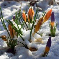 Такой переменчивый март... :: Михаил Болдырев