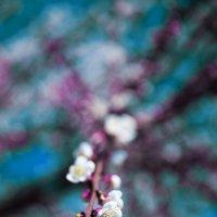 Пришла весна :: Сергей Крысь