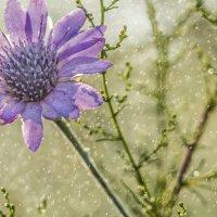 На теплом летнем дождике :: Константин Бобров