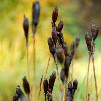 Осенние травы :: Tatiana Belyatskaya