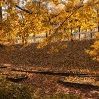 Золотая осень :: Наталья Копылова