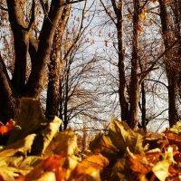 осень :: валентин яблонский
