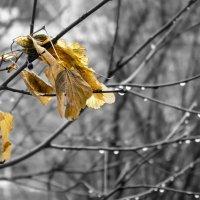 Последние листья. :: Андрей