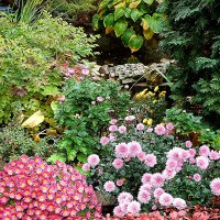 Заглянула осень в сад :: svetlanavoskresenskaia