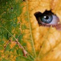 настроение осень :: Evgeniy (Евгений) Roslov (Рослов)