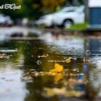 Печальная осень опала дождем :: Юрий