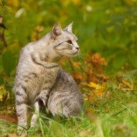 где то мышки шуршат в желтых листьях :: Lemura