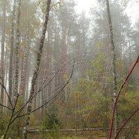 утро в лесу :: Виктор _
