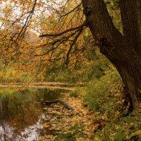 Осень в парке золотая :: Константин Тимченко