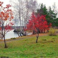 Осенние краски :: Олег Васильевич