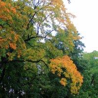 А осень рисует... :: Evgenia Sharabanova