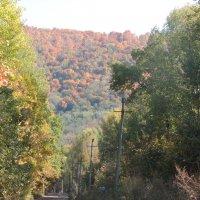 Дорога в осень :: Филарит