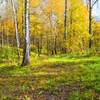солнца мало не бывает..(осенью,в лесу) :: Рамзия