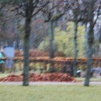 В парке :: Стрижикозин Валерий