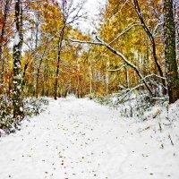 Еще не все опали листья в парке,а снег уже на осень вето наложил :: Равиль