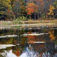 Краски октября :: Нина Синица
