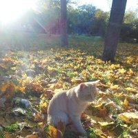 Осень в  парке :: Ирина Диденко