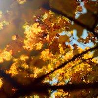 Золотая осень :: Julia Volkova