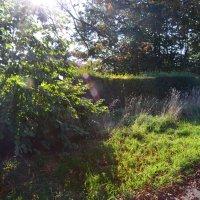 Осенний свет :: Tamara