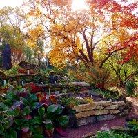 осень в ботаническом саду :: екатерина