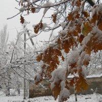 Коварство первого снега. Я ещё не готова испить твою горечь.... :: Галина