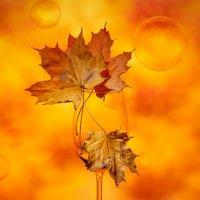 Осенний коктейль :: Larianna Holm