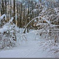 Новогодняя погода дает шанс для съемки ! :: Юрий Ефимов