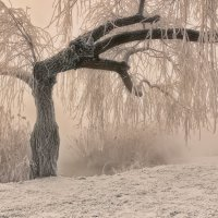 Тёплая графика морозного утра :: Александр Плеханов
