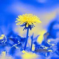 весна :: Александр S