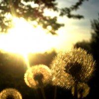 Весенний закат!!! :: Потапова Анна