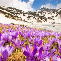 Болгарская весна :: Свилена Табакова