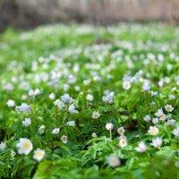 Весна в лесу. :: Артём Зайцев