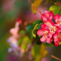 Весна :: inna15 Белевцева