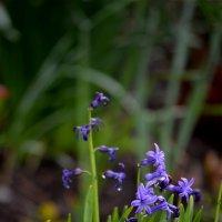Весенние цветы :: Дарья