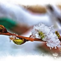 Снег в Апреле :: Alexander Dementev