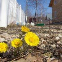 Моя Весна :: Андрей Синявин